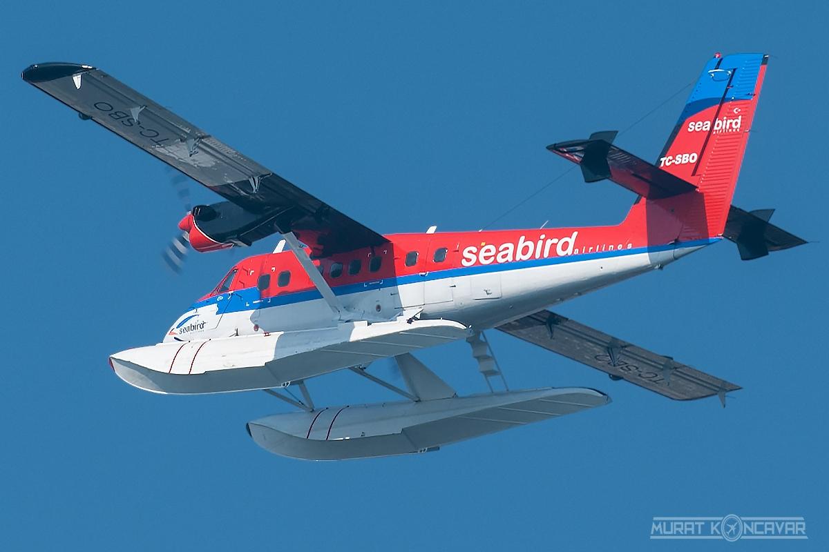 seabird twotter